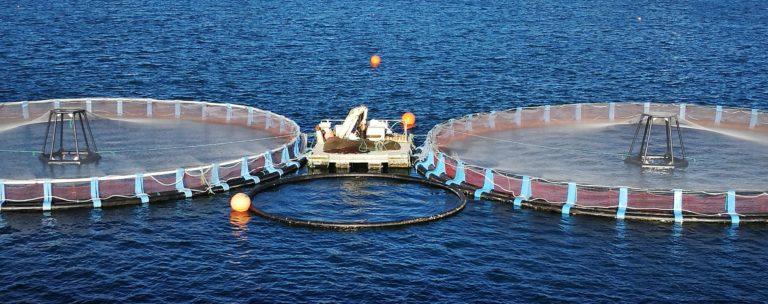 Jaulas marinas flotantes